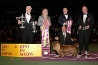 Westminster Kennel Club Dog Show NYC