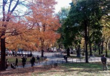 Things to do in New York in Fall