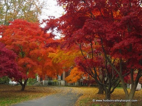 Fall Foliage New York
