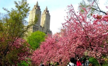 Things to do in New York in Spring