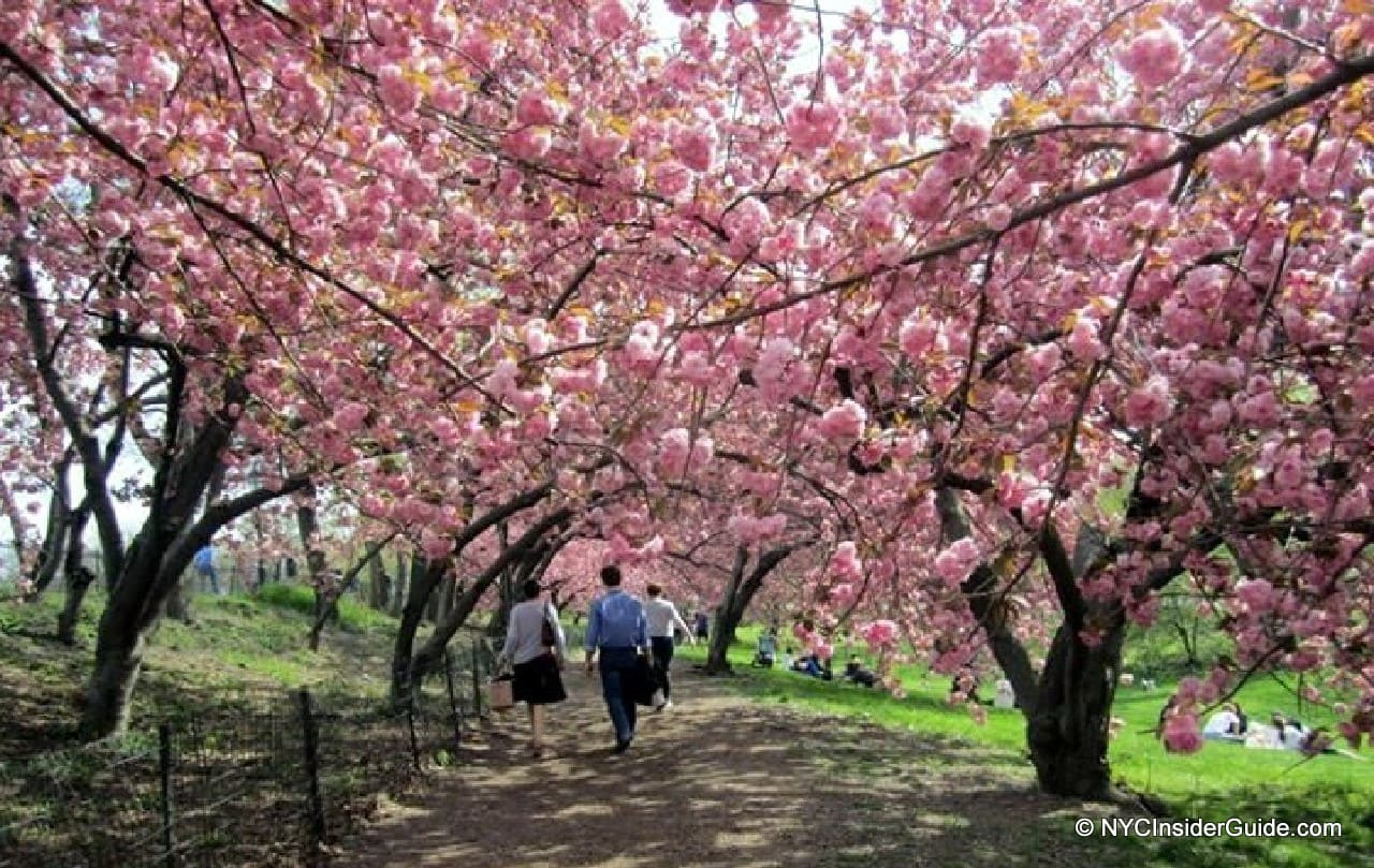 Things to do in New York in April